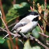 Attracting Pollinators Bird on Shrub