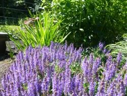 Companion Plants June 2015