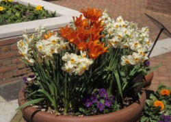 Container Gardening-Univ. of Illinois Ext.