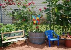Garden Thyme at Fairplex